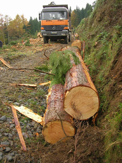 Transport of felled trees to park