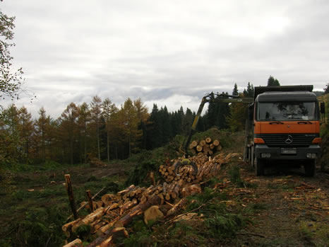 Forest truck loading felled trees