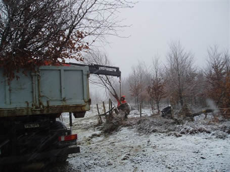Extraction of trees for replanting